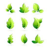 Verschiedene Blätter