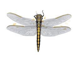 Libelle aus einem Spritzer Aquarell, farbige Zeichnung, realistisch. Vektor-Illustration von Farben vektor