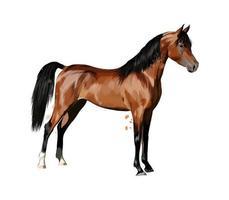 Pferd aus Aquarellspritzer. handgezeichnete Skizze. Vektor-Illustration von Farben vektor