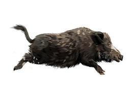 vildsvin från ett stänk av akvarell, färgad teckning, realistisk. vektor illustration av färger