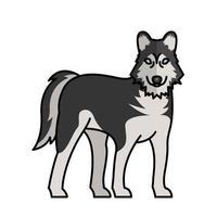 Sibirischer Wolf Hund Haustier Maskottchen Rasse Charakter vektor