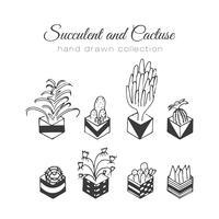 Handgezeichnete Succulent und Kakteen Set vektor