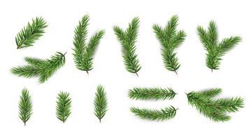 Sammlung von realistischen Tannenzweigen für Weihnachtsbaum, Kiefer. Vektor-Illustration vektor