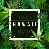 Vektor tropische Blätter auf schwarzem Hintergrund.