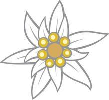 Edelweiß Blütenfarbe vektor