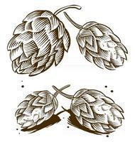 Vintage Gravur Illustration von Hopfen und Malz für Bierlogo vektor