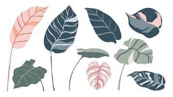 tropische Blätter Vektor-Set. Palmblatt, Kokosblatt, Bananenblätter, Monstera, Farn, Botanik und Dschungelblätter Design für Naturhintergrund, Öko- und Sommerbanner, Tapeten, Muster und Drucke. vektor