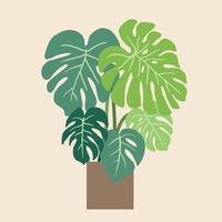 monstera deliciosa, den schweiziska ostväxten, en populär dekorativ husväxt som är infödd i tropisk regnskog. vektor