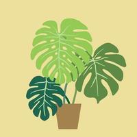 monstera deliciosa, die schweizer käsepflanze, eine beliebte dekorative zimmerpflanze, die im tropischen regenwald beheimatet ist. vektor