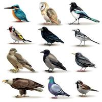 Vögel realistische Fauna Sammlung Vektor-Illustration vektor
