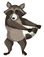 En tvättbjörn gör flossdans