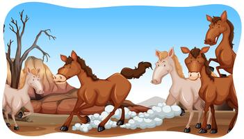 Pferde vektor
