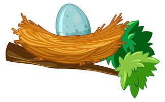Ägg i boet gren vektor