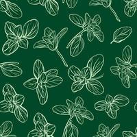 Basilikumblätter und Kräuter nahtloses Muster vektor