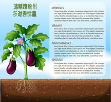 Äggplanter på jordbruksmark med text