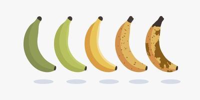 Reihe von Bananenschalen unterschiedlichen Reifegrades. der Entwicklungsfortschritt der Bananenvektor-Icon-Design-Illustration vektor