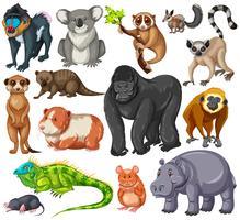 Unterschiedliche Art von Wildtieren auf weißem Hintergrund