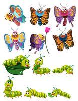 Raupen und Schmetterlinge mit bunten Flügeln vektor