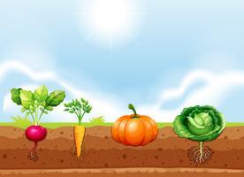 En uppsättning av grönsaker och rot