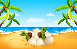 Baby havssköldpadda lucka på stranden vektor