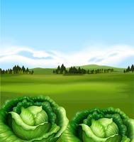 Ekologisk kål med vackert landskap vektor