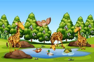 Många djur vid dammen vektor