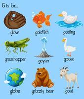 Plakatbuchstabe g und viele Wörter vektor