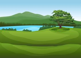Ett naturligt grönt landskap