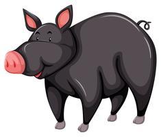 Graues Schwein vektor