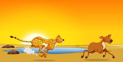 Ein Gepard, der Hirsch jagt