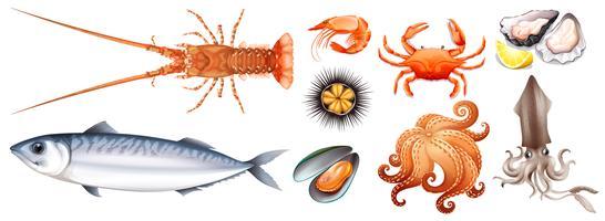 Olika typer av skaldjur vektor