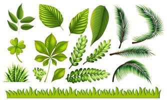 Olika typer av gröna blad och gräs