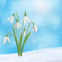 Schneetropfen-Blumen-Zusammensetzungs-Vektorillustration vektor
