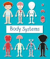 Liten pojke och kroppssystemaffisch vektor