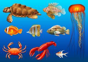 Olika typer av vilda djur under vattnet