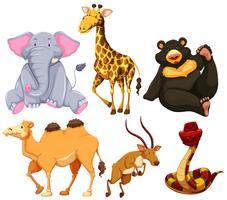 Sex olika typer av vilda djur