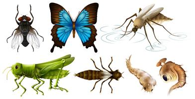 Olika typer av insekter vektor
