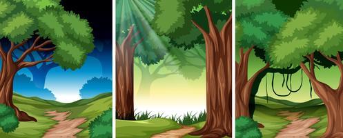 Set av tropisk regnskog bakgrund