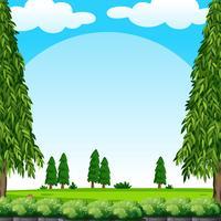 Scen med grön gräsmatta och tallar