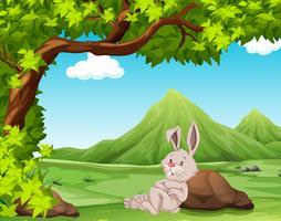 Ein Kaninchen in der Natur