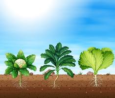 Eine Reihe von organischen Pflanzen