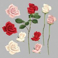 Rose realistische Set-Vektor-Illustration vektor