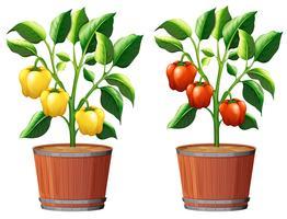 Gul och Red Bell Pepper Plant vektor