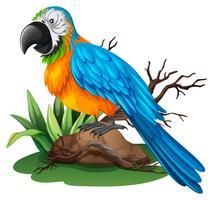 Papegoja med blå och gul fjäder
