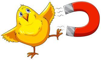 Magnet och chick vektor