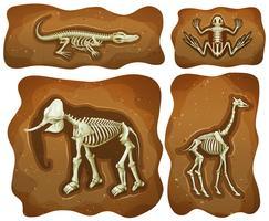 Vier verschiedene Fossilien unter der Erde