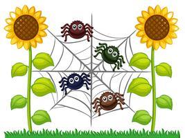 Spindlar på web i solrosträdgård vektor