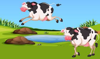 Zwei Kühe auf dem Hof vektor