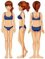 Ein Vektor des weiblichen Körpers