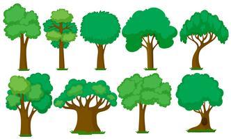 Sats av olika träd